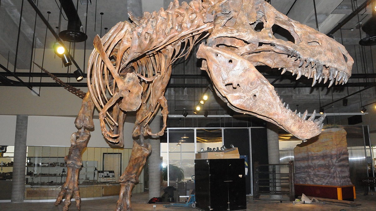 scotty the tyrannosaurus rex � research casting international